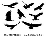 set of silhouettes of flying... | Shutterstock .eps vector #1253067853