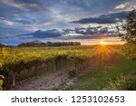 grape harvest italy | Shutterstock . vector #1253102653