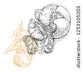 hand drawn vector sketch of... | Shutterstock .eps vector #1253105203