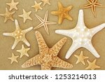 starfish seashell selection on... | Shutterstock . vector #1253214013
