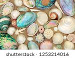 large seashell selection on... | Shutterstock . vector #1253214016