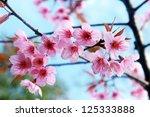 Pink Blossom Sukura Flowers On...