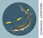 sturgeon fish on the background ... | Shutterstock .eps vector #1253475283