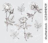 a detailed illustration of...   Shutterstock .eps vector #1253498929