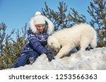 dog breed samoyed husky with... | Shutterstock . vector #1253566363