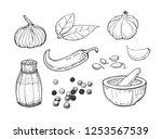 vector illustration of spices...   Shutterstock .eps vector #1253567539