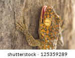 Closeup Of Gecko On The Wall