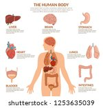 infographics of human organs... | Shutterstock .eps vector #1253635039