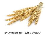 wheat on the white background | Shutterstock . vector #125369000