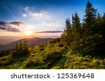 Colorful Summer Landscape In...