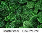Natural Green Background Of...