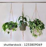 three jute twine macrame plant... | Shutterstock . vector #1253809069