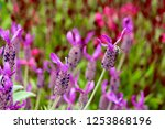 shot in kobe  japan | Shutterstock . vector #1253868196