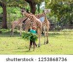nov 15 2018 a zookeeper... | Shutterstock . vector #1253868736