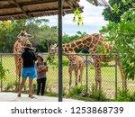 nov 15 2018 tourists feeding... | Shutterstock . vector #1253868739