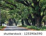 sukhothai  thailand  apr 25  ... | Shutterstock . vector #1253906590