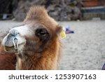 leh ladakh  india   october 10...   Shutterstock . vector #1253907163