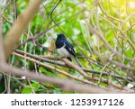 the bird is on a branch of a...   Shutterstock . vector #1253917126