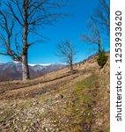 early spring carpathian...   Shutterstock . vector #1253933620