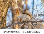 Squirrel In Winter In A Forest...