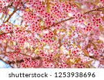 close up of wild himalayan... | Shutterstock . vector #1253938696