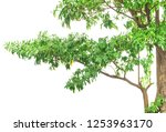 green leaves and branches... | Shutterstock . vector #1253963170