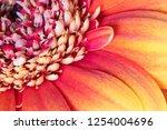 close up of a flower   Shutterstock . vector #1254004696