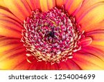 colorful flower close up   Shutterstock . vector #1254004699