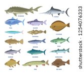 fish set. collection of aquatic ... | Shutterstock .eps vector #1254076333