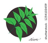 neem leaf. ayurveda herb.... | Shutterstock .eps vector #1254103459