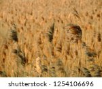 close up of dry reeds. field of ...   Shutterstock . vector #1254106696