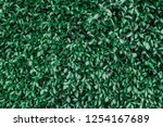 green leaf flat lay background... | Shutterstock . vector #1254167689