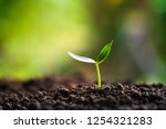 green sprout growing in nature... | Shutterstock . vector #1254321283