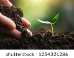 hand planting young tree in... | Shutterstock . vector #1254321286