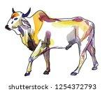 Zebu Cow Contour  Freehand...