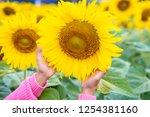 hands holding sunflower in... | Shutterstock . vector #1254381160