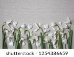 spring flowers snowdrops and... | Shutterstock . vector #1254386659