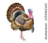 Turkey Bird Isolated On White...