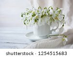 snowdrops in a cup and saucer... | Shutterstock . vector #1254515683