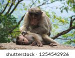 close up of monkey family in... | Shutterstock . vector #1254542926