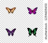set of moth realistic symbols...
