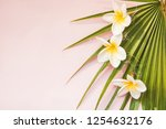 palm leaf and tropical plumeria ... | Shutterstock . vector #1254632176