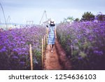 young asian travel woman with... | Shutterstock . vector #1254636103