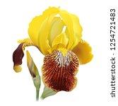 iris flower. hand drawn...   Shutterstock .eps vector #1254721483