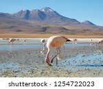 flamingos in lagoon on the... | Shutterstock . vector #1254722023