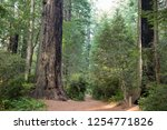 hiking trails at the lady bird... | Shutterstock . vector #1254771826