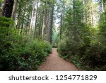 hiking trails at the lady bird... | Shutterstock . vector #1254771829
