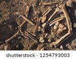 Bones Of Animals Eaten By...