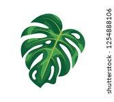 tropical palm leaves monstera... | Shutterstock .eps vector #1254888106