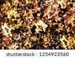 de focused glittering star... | Shutterstock . vector #1254923560
